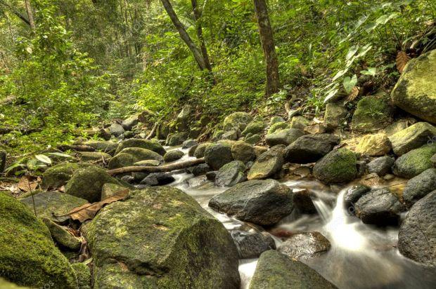 depositphotos_11874466-stock-photo-national-park-penang